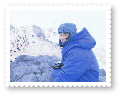 2536-royal-activity-antarctica-cape-royds-photograph-flock-penguins