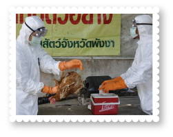 2547-avian-influenza