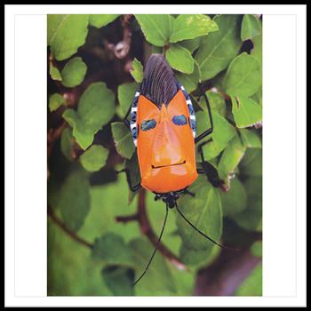 4 มิถุนายน 2552 แมลงหน้ามนุษย์