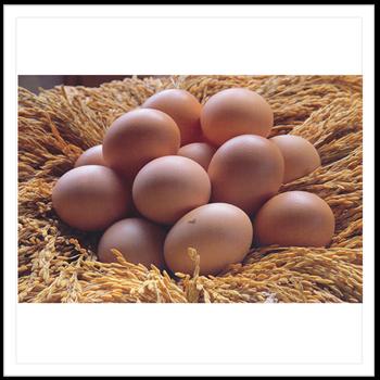 14 มกราคม 2554 ไข่กับข้าว