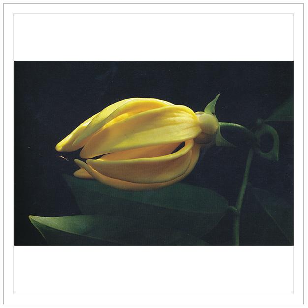 21 เมษายน 2555 ดอกไม้วังสระปทุม